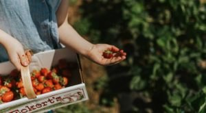 Take The Whole Family On A Day Trip To This Pick-Your-Own Strawberry Farm In Kentucky