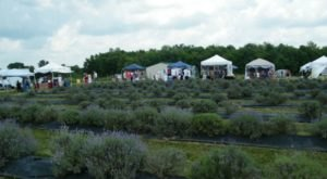 Ohio's Annual Lavender Festival Belongs On Your Springtime Bucket List