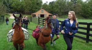 Go Hiking With Llamas In Virginia For An Adventure Unlike Any Other