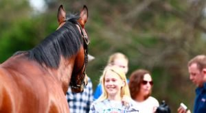 6 Horse Farm Tours In Kentucky That Are Perfectly Enchanting