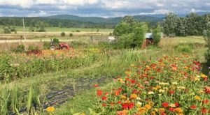 Visit This Flower Farm In Vermont For That Beautiful Scenic Experience You Crave