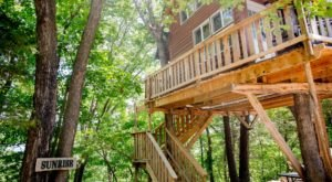 7 Amazing Treetop Adventures You Can Only Have In Missouri