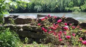 This Jaw-Dropping Rose Garden Is Hiding Within The Ruins Of An Old Iowa Mill