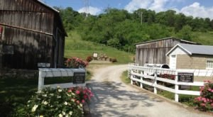 Sip Wine And Dine On BBQ At StoneBrook Winery Near Cincinnati
