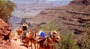 Go Hiking With Mules In Arizona For An Adventure Unlike Any Other