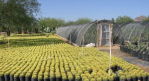 The Cactus Farm In Arizona Where You'll Have A Perfectly Prickly Adventure