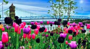7 Springtime Walks To Take In Cincinnati That Are Bursting With Blooms