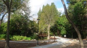 There's A Tunnel Of Trees Hiding In This Little-Known Park In Southern California And You'll Want To Find It