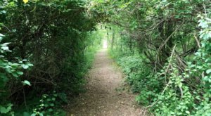 The Secret Garden Hike Near Detroit Will Make You Feel Like You're In A Fairytale