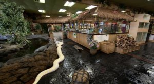 This Reptile Zoo In Southern California  Is Unlike Anything You've Ever Seen