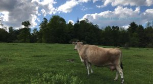 Tomten Farm Is An Incredible Animal Sanctuary Hidden Right Here In New Hampshire