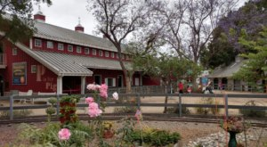 The One-Of-A-Kind Zoo In Southern California With Surprises Around Every Corner