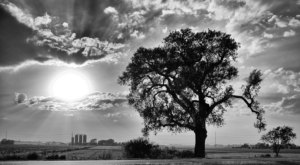 There's No Other Historical Landmark In Kansas Quite Like This 100-Year-Old Tree