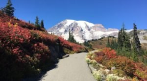 These 7 Magical Washington Trails Are Full Of Wildflowers And Waterfalls