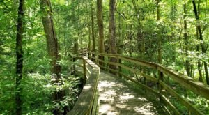Explore Ancient Forests On This Enchanting Boardwalk Trail Through South Carolina