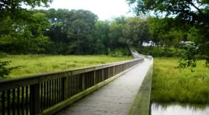 Windsor Castle Park Trail Is An Easy Boardwalk Trail In Virginia You'll Want To Take