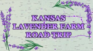 Take This Road Trip To The 6 Most Eye-Popping Lavender Fields In Kansas