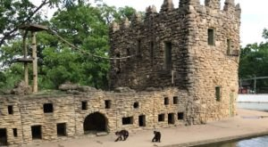 The One-Of-A-Kind Zoo In Kansas With Surprises Around Every Corner