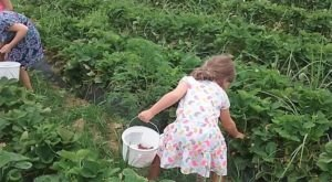 Take Your Whole Family On A Day Trip To This Pick-Your-Own Strawberry Patch In Alabama