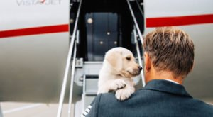 This New Service Is Offer Luxury Private Jet Travel For Your Pet