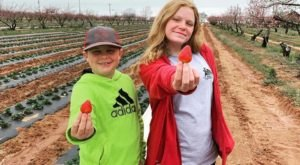 You Can Pick Your Own Strawberries At This Enchanting Orchard In Texas