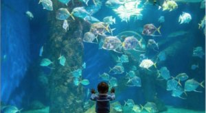 Your Whole Family Will Love A Trip To The Virginia Aquarium With Over 10,000 Colorful Fish