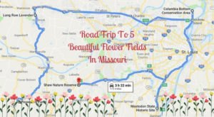 Take This Road Trip To The 5 Most Eye-Popping Flower Fields In Missouri