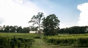 This Hidden Vineyard In Louisiana Is Worthy Of Its Own Day Trip