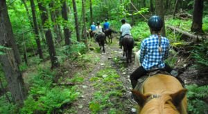 Go Hiking With Icelandic Horses In Vermont For An Adventure Unlike Any Other