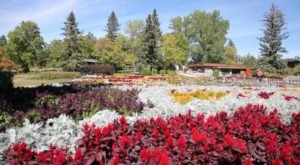 The Incredible International Peace Garden In North Dakota Is Full Of Blooms