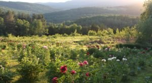 The Dreamy Peony Farm In Vermont You'll Want To Visit This Spring