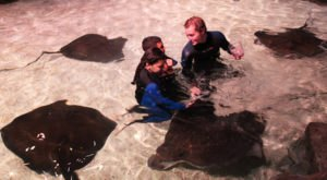 Play With Stingrays At This South Carolina Aquarium For An Absolutely Adorable Adventure