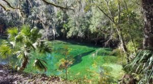Florida's Most Refreshing Hike Will Lead You Straight To A Beautiful Swimming Hole
