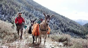 Go Hiking With Goats In Idaho For An Adventure Unlike Any Other