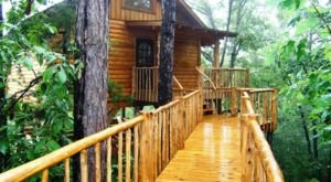 This Hidden Arkansas Forest Holds The Most Delightful Treehouses For You To Stay In