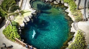 Play With Dolphins At This Hawaii Resort For An Absolutely Adorable Adventure