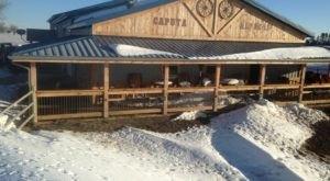 Visit This South Dakota Alpaca Farm For A Fun And Fuzzy Adventure