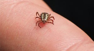 You Won't Be Happy To Hear That Nebraska Is Experiencing A Major Surge Of Ticks This Year