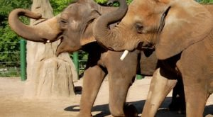 Kentucky's Most Underrated Zoo Is 50 Years Old And It's Time To Pay It A Visit