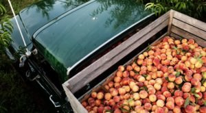 Celebrate Summer With A Visit to this Legendary Peach Truck in Nashville