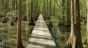 9 State Park Nature Trails In Louisiana That Will Lead You Through Some Spectacular Scenery