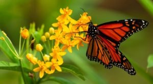 The Monarch Butterfly Festival In Cincinnati That's Sure To Dazzle