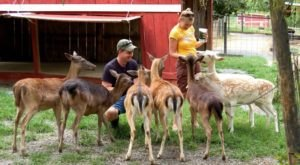 The One Of A Kind Deer Park In Tennessee That Your Kids Will Absolutely Love