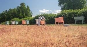 Go On A Bee Safari At This Beautiful Family Farm In Oregon