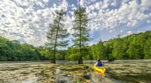 7 Reasons To Drop Everything And Visit Arkansas' Small But Mighty Forest