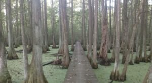 These 7 Easy Loop Trails In Louisiana Are Perfect For A Weekend Adventure