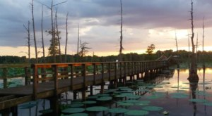 8 Swamp Trails That Will Show You How Beautiful Louisiana Truly Is