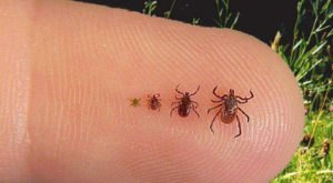 You Won't Be Happy To Hear That New Hampshire Is Experiencing A Major Surge Of Ticks This Year