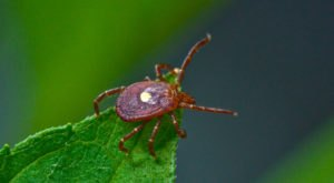 You Won't Be Happy To Hear That Delaware Is Experiencing A Major Surge Of Ticks This Year