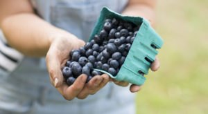 This Delightful Blueberry Festival In Massachusetts Might Be The Best Thing About Summer